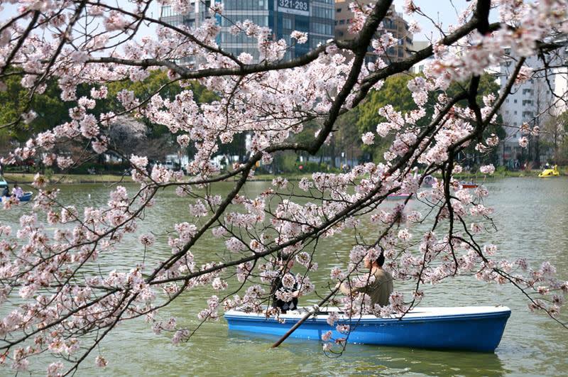上野恩賜公園(照片來源:Kabacchi@Flickr)https://goo.gl/z9WFRk