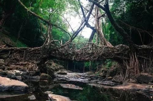 這 裡 的 自 然 景 觀 有 別 於 「 印 象 中 」 的 印 度 。