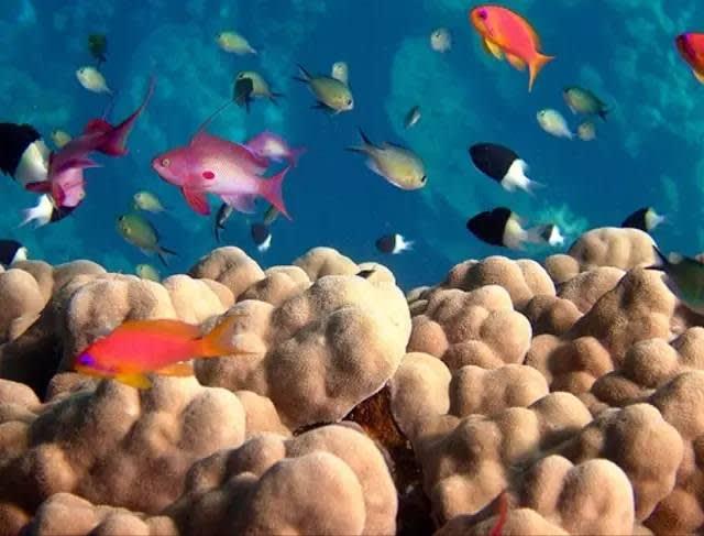 這 裡 根 本 是 海 底 總 動 員 真 實 版! | flickr@J D Hill