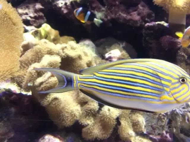 國 立 海 洋 生 物 博 物 館