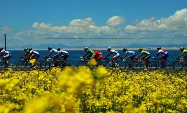 油 菜 花 盛 開 季 節 吸 引 了 不 少 單 車 愛 好 者 前 往 。