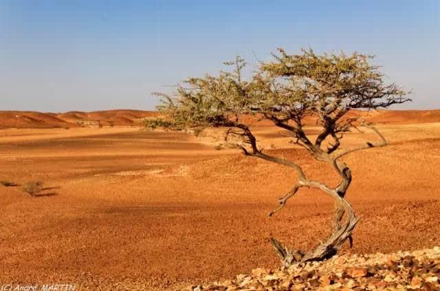 沙 漠 中 的  一 棵 樹 |Flickr: L'Abominable Homme de Rires