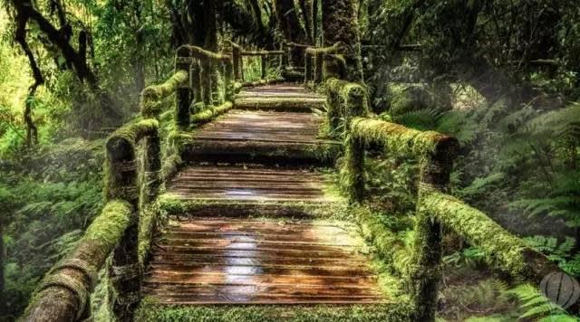 神 秘 的 徒 步 步 道 。