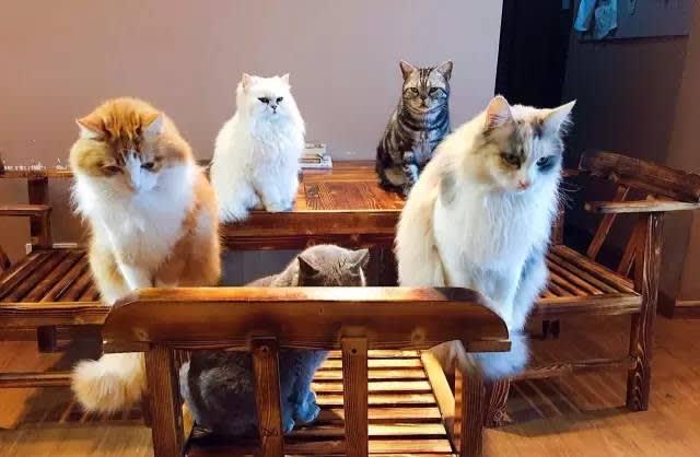 Pic|Weibo@Cateyes 貓 咪 咖 啡 屋