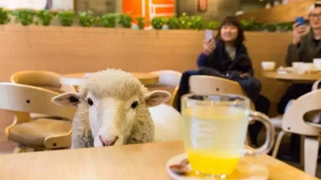與 羊 咩 咩 共 進 下 午 茶 。