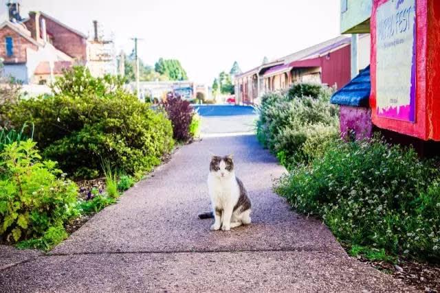 △ 在 清 晨 的 壁 畫 小 鎮 , 偶 遇 一 隻 可 愛 的 貓 。