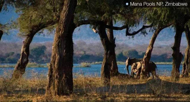 ▲Mana Pools NP,Zimbabwe