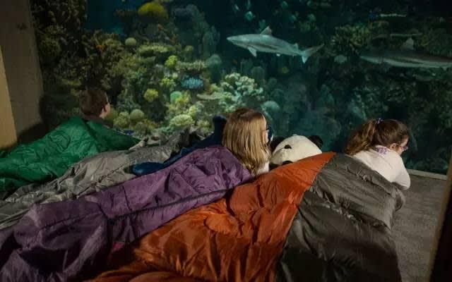 巴 爾 的 摩 國 家 水 族 館