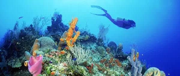 峇 里 島 。