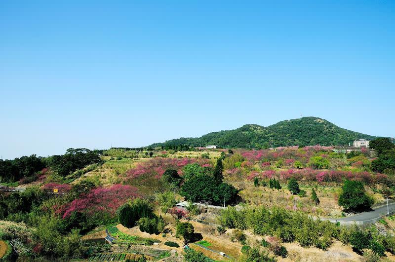 台北陽明山櫻花(照片來源:Sinchen.Lin@Flickr)https://goo.gl/HdL8oy
