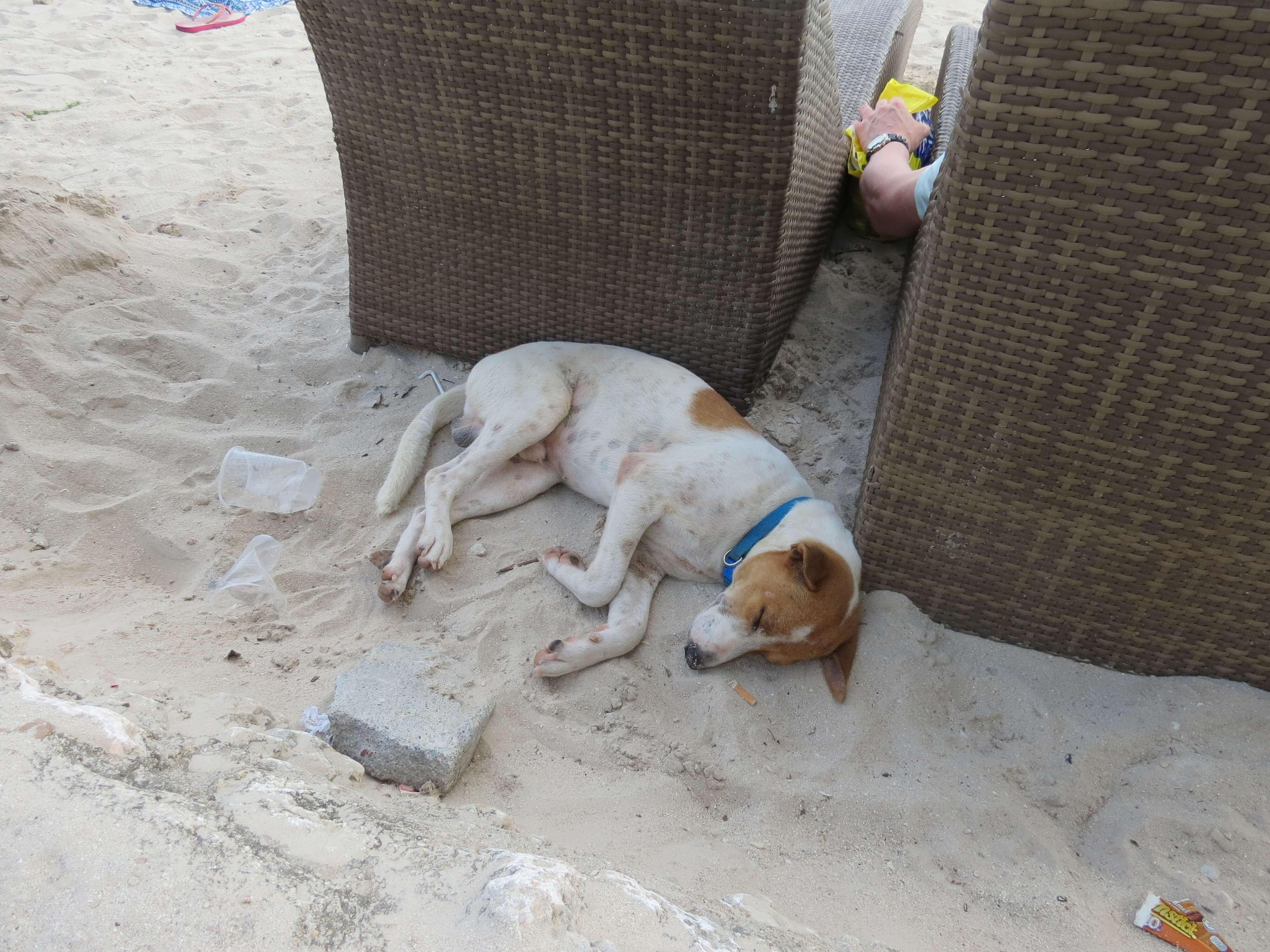 連狗狗在海灘上都也跟著放鬆了呢!