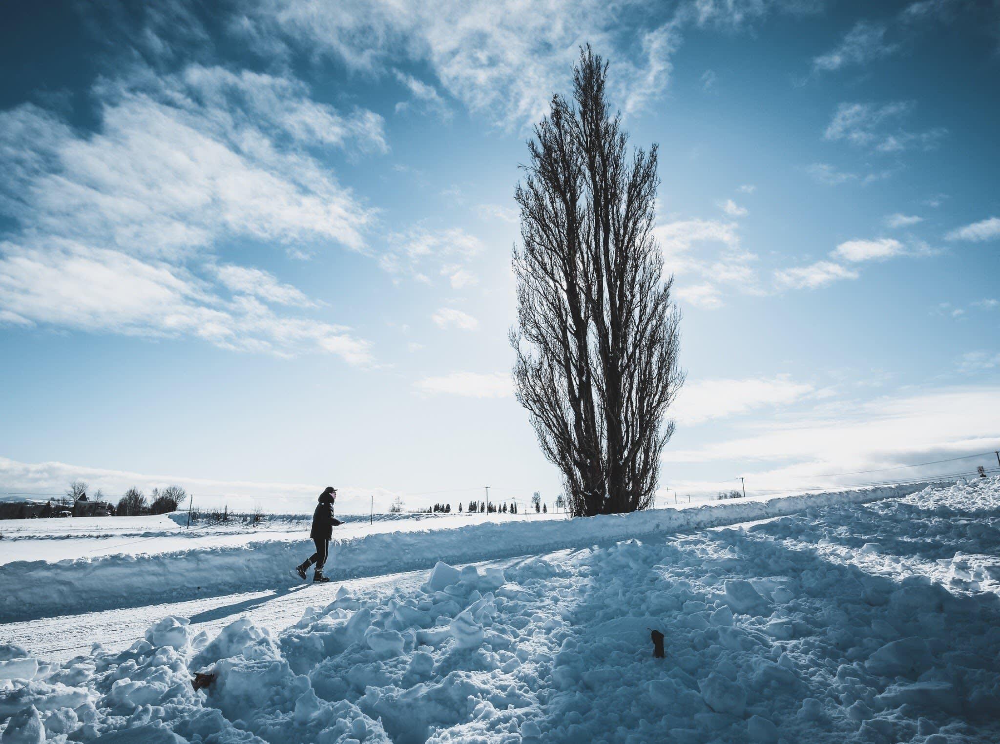 ケンとメリーの木 。 Photographer|Zach Huang