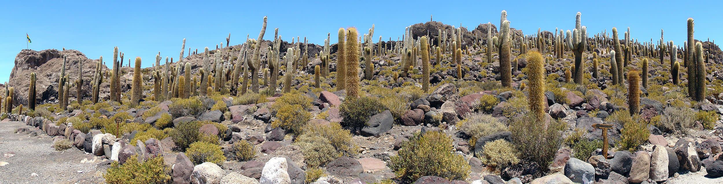 Salar_de_Uyuni_Décembre_2007_-_Cactus