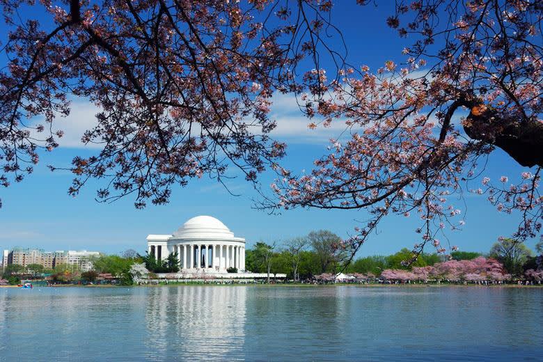 其 實 華 盛 頓 特 區 另 外 有 名 的 竟 然 是 櫻 花