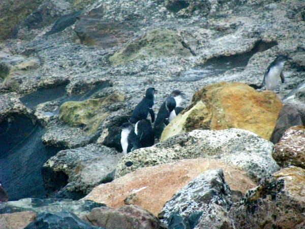 繞 開 海 豹 , 終 於 找 到 了 企 鵝 的 踪 跡 。