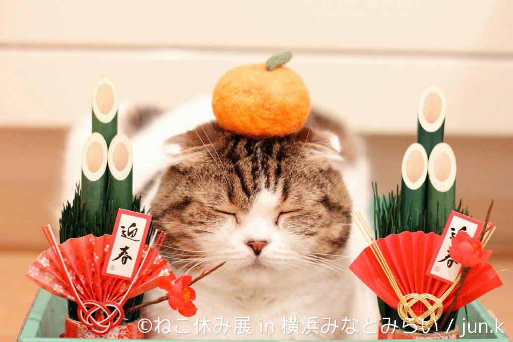 Photo : pettimes.jp
