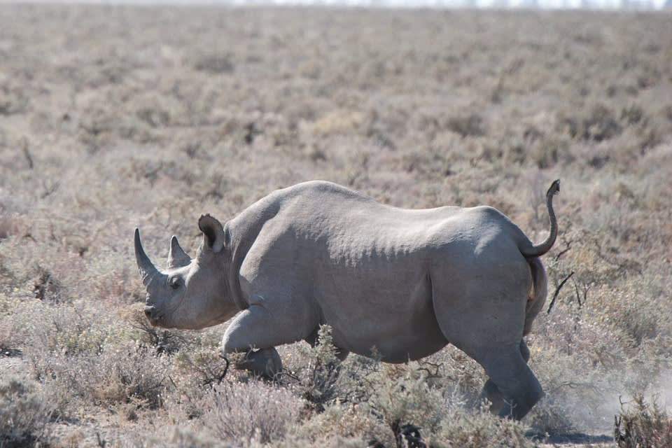 rhino-517974_960_720