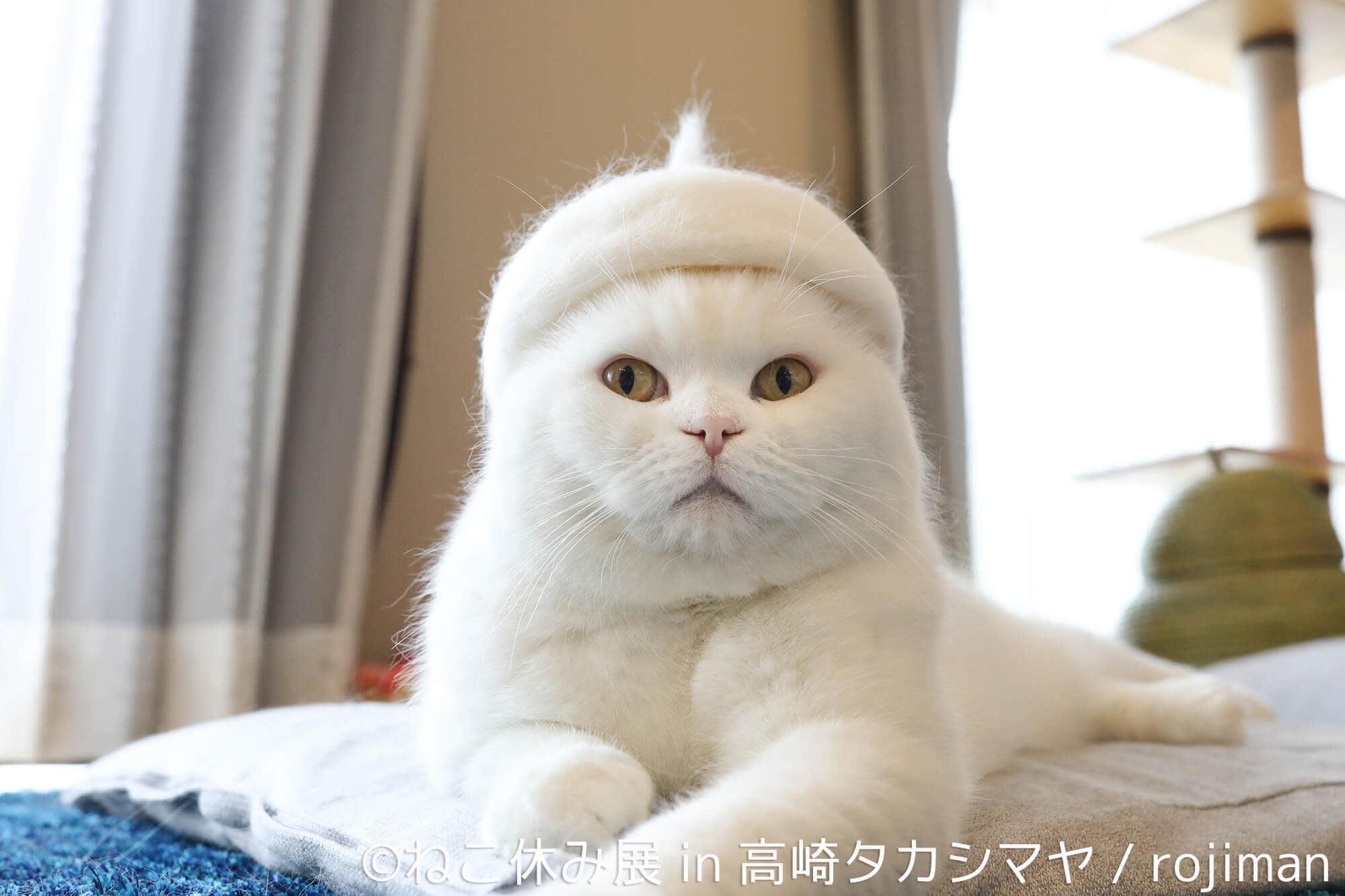 東京貓咪休息展