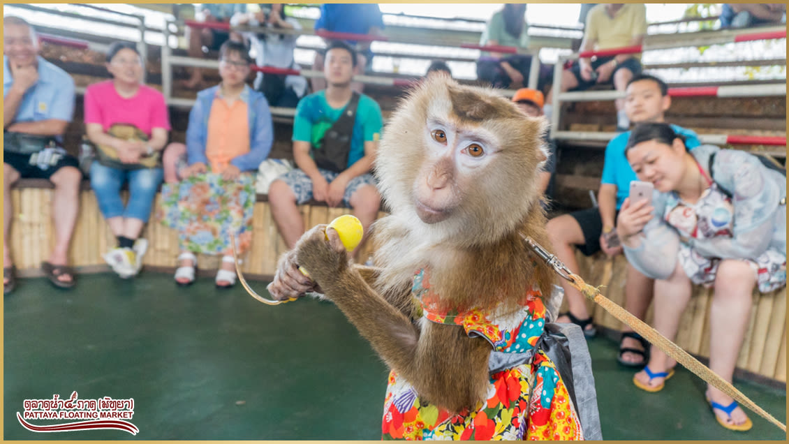 How-To-Enjoy-A-Klook-It-Yourself-Holiday-In-Pattaya-floating-market-monkey-show