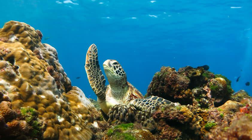 07海龜共泳體驗潜水Discover Scuba Diving