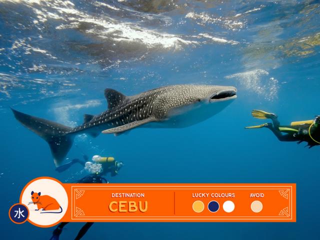 cebu whale shark