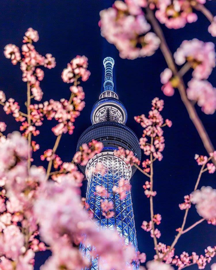 Tokyo SKytree Cherry Blossom