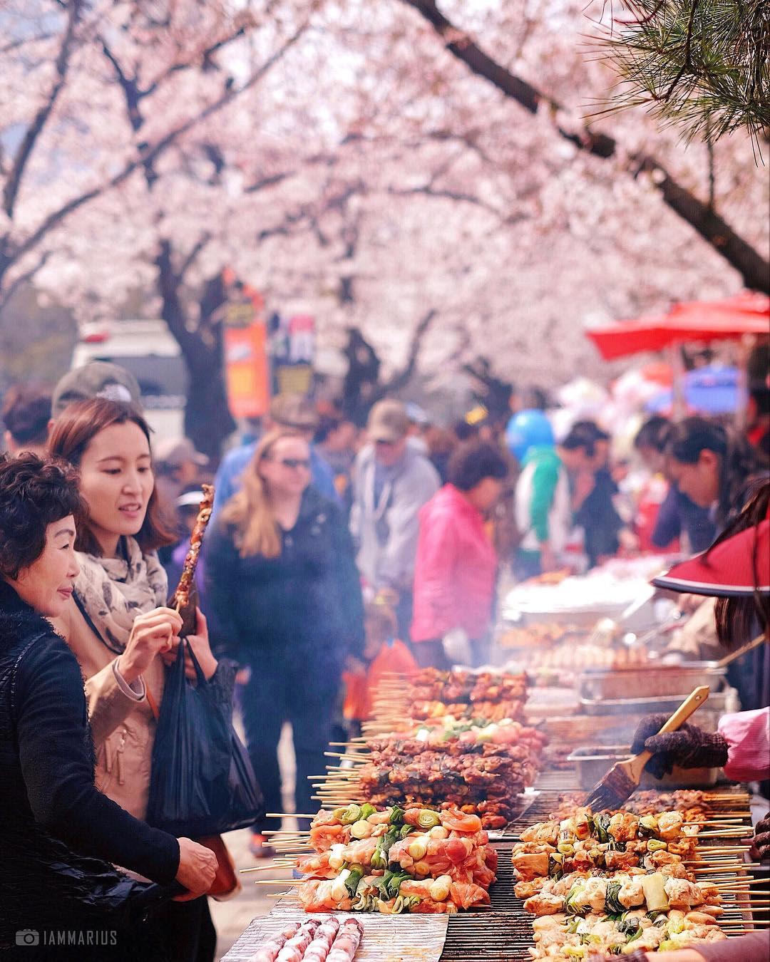 yeouido Cherry Blossom