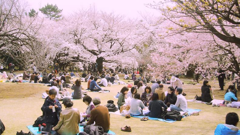 Hanami in Tokyo