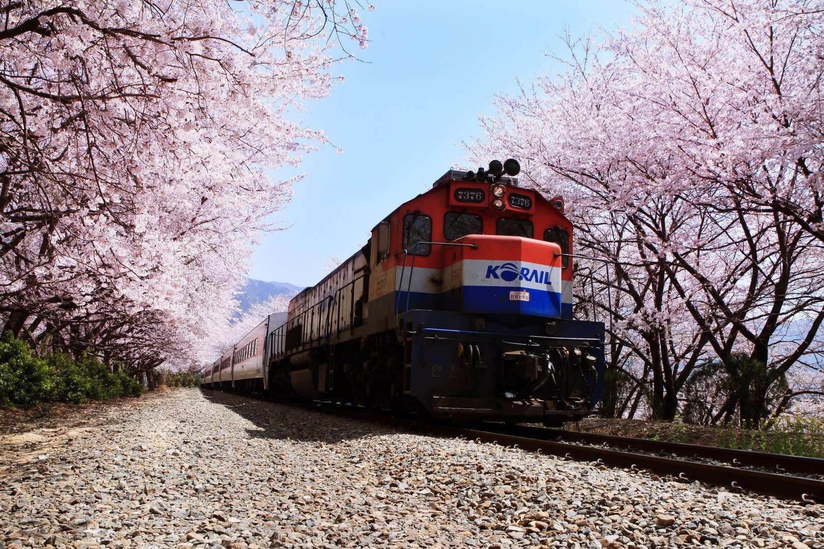 26 กิจกรรมที่คุณต้องทำในหน้าซากุระ - Klook's Blog