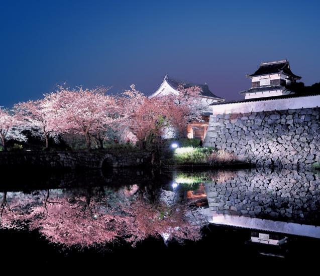 fukuoka castle cherry blossom
