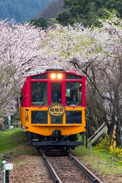 sagano train cherry blossom