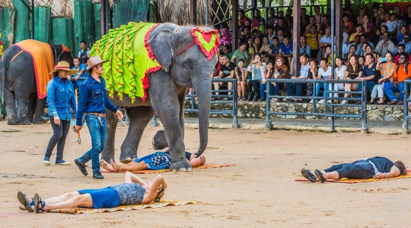 How-To-Enjoy-A-Klook-It-Yourself-Holiday-In-Pattaya-noong-noch-tropical-garden-elephant-show