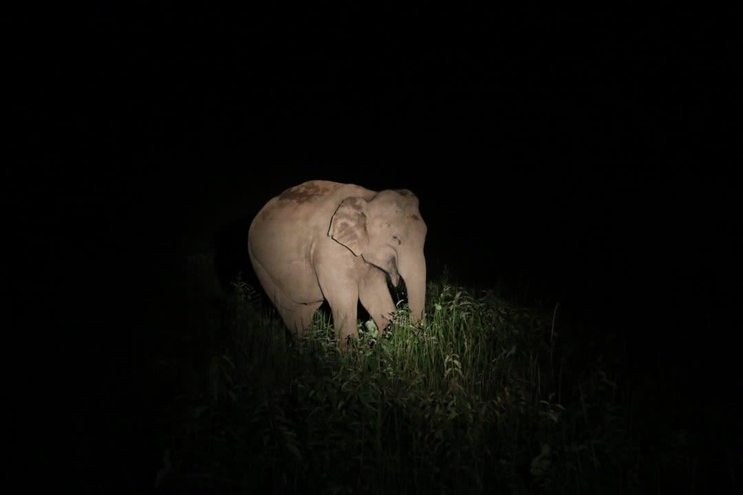 khao yai national park elephant