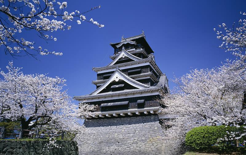 Kumamoto Sakura