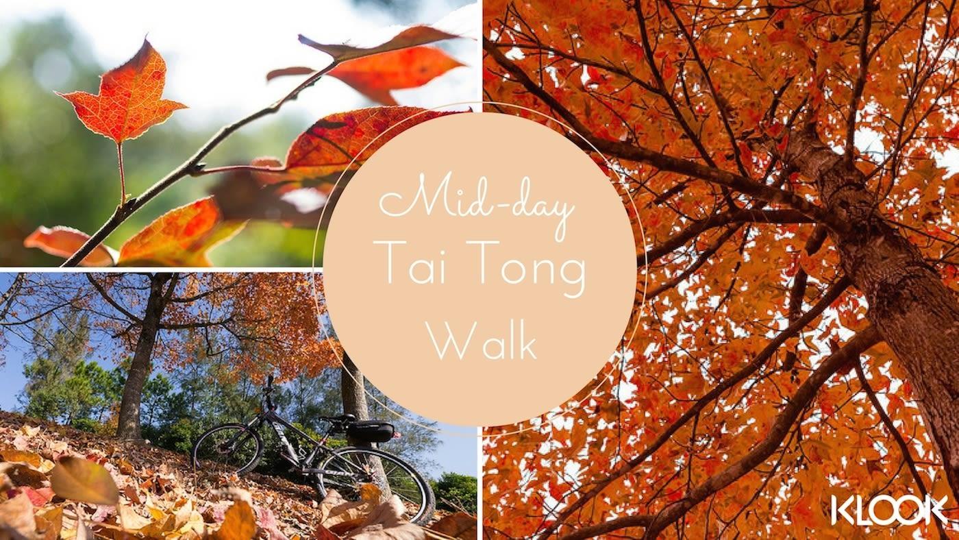hiking, hiking trail, hiking in hong kong, hiking with lover, hiking with boyfriend, hiking with girlfriend, Tai Tong, Maple Leaf