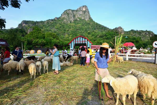 Hua-Hin-Car-Charter-Swiss-Sheep-Farm