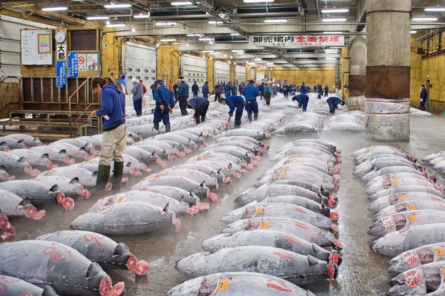 How-To-Save-$100-On-Your-Year-End-Holiday-To-Japan-tsukiji-fish-market
