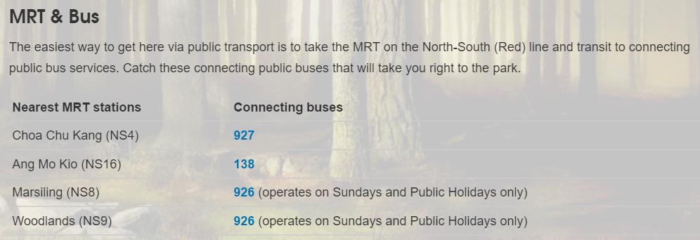 Night Safari Bus Schedule