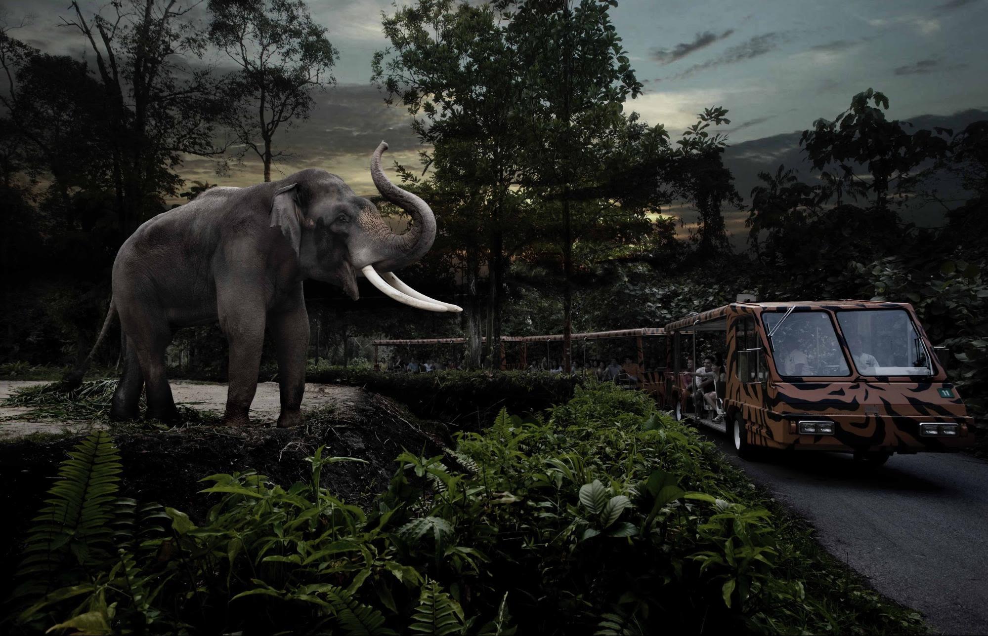 Night Safari Elephant Tram