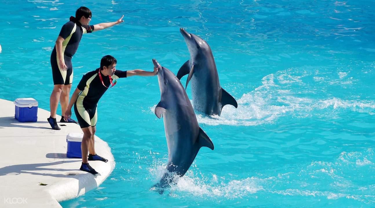 yehliu-ocean-world-dolphins