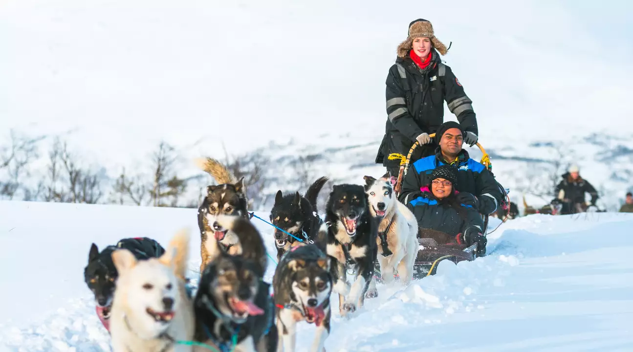 northern lights husky sledding sami tour
