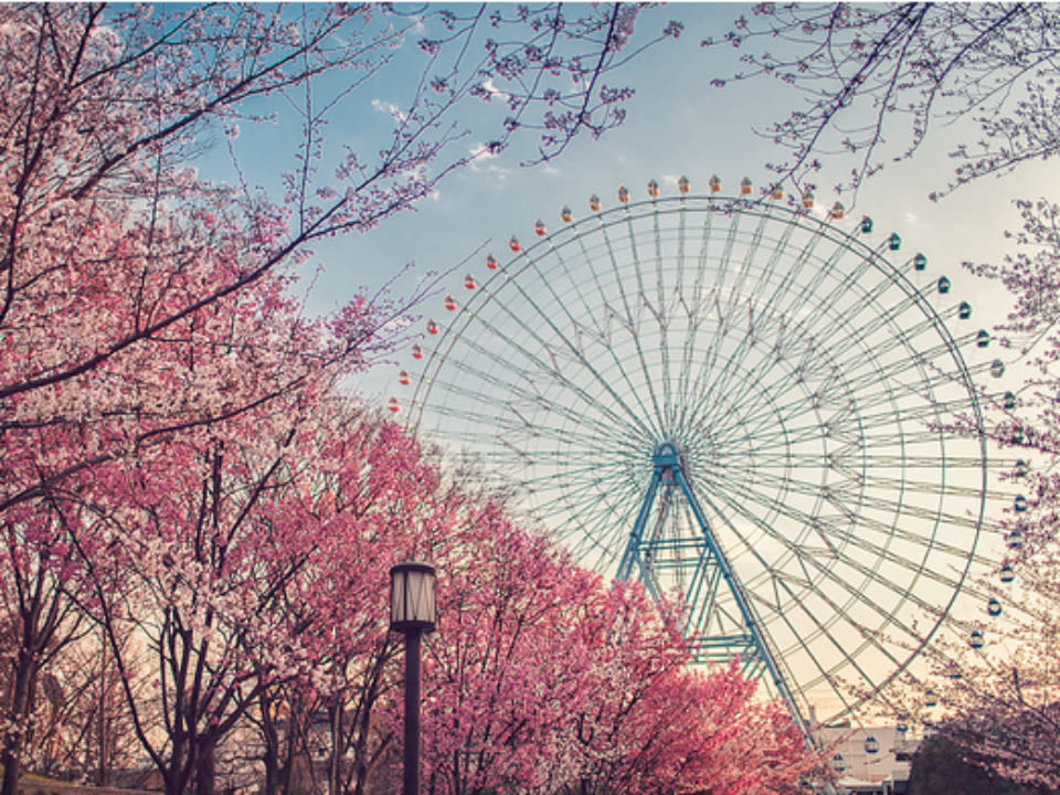Tempozan Ferris Wheel during cherry blossom season