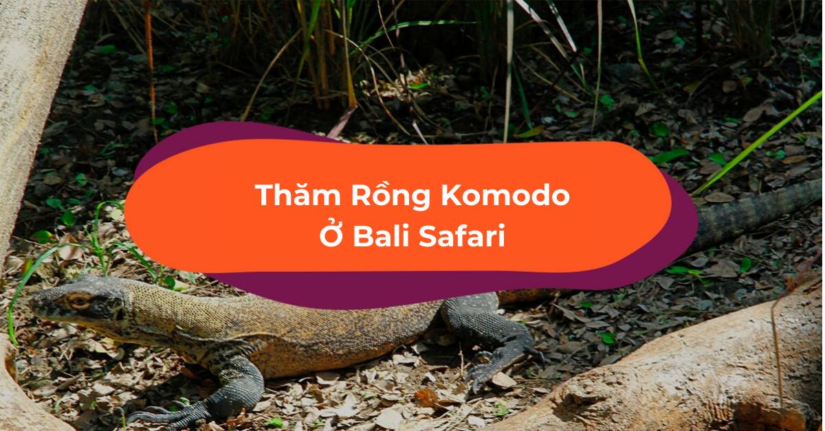 Vi Vu Bali Safari, Nhà Của Các Bé Rồng Komodo Đáng Yêu