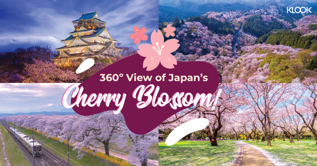 360° Videos Of Pink And Pretty Places To Visit In Japan (And Around)