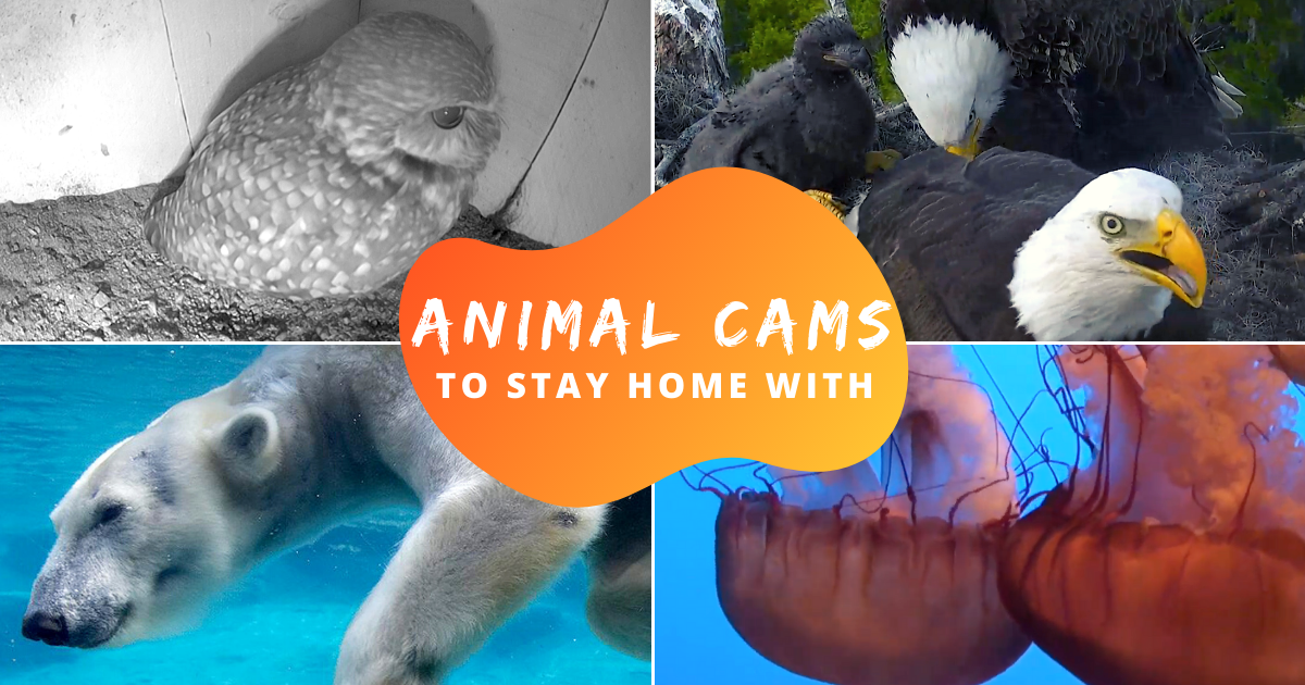 Daily Dose Of Cuteness From These Live Animal Cams