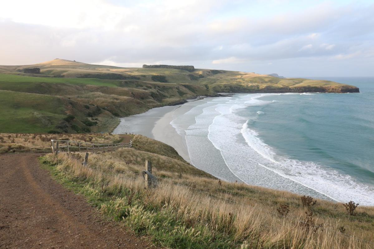 dunedin นิวซีแลนด์