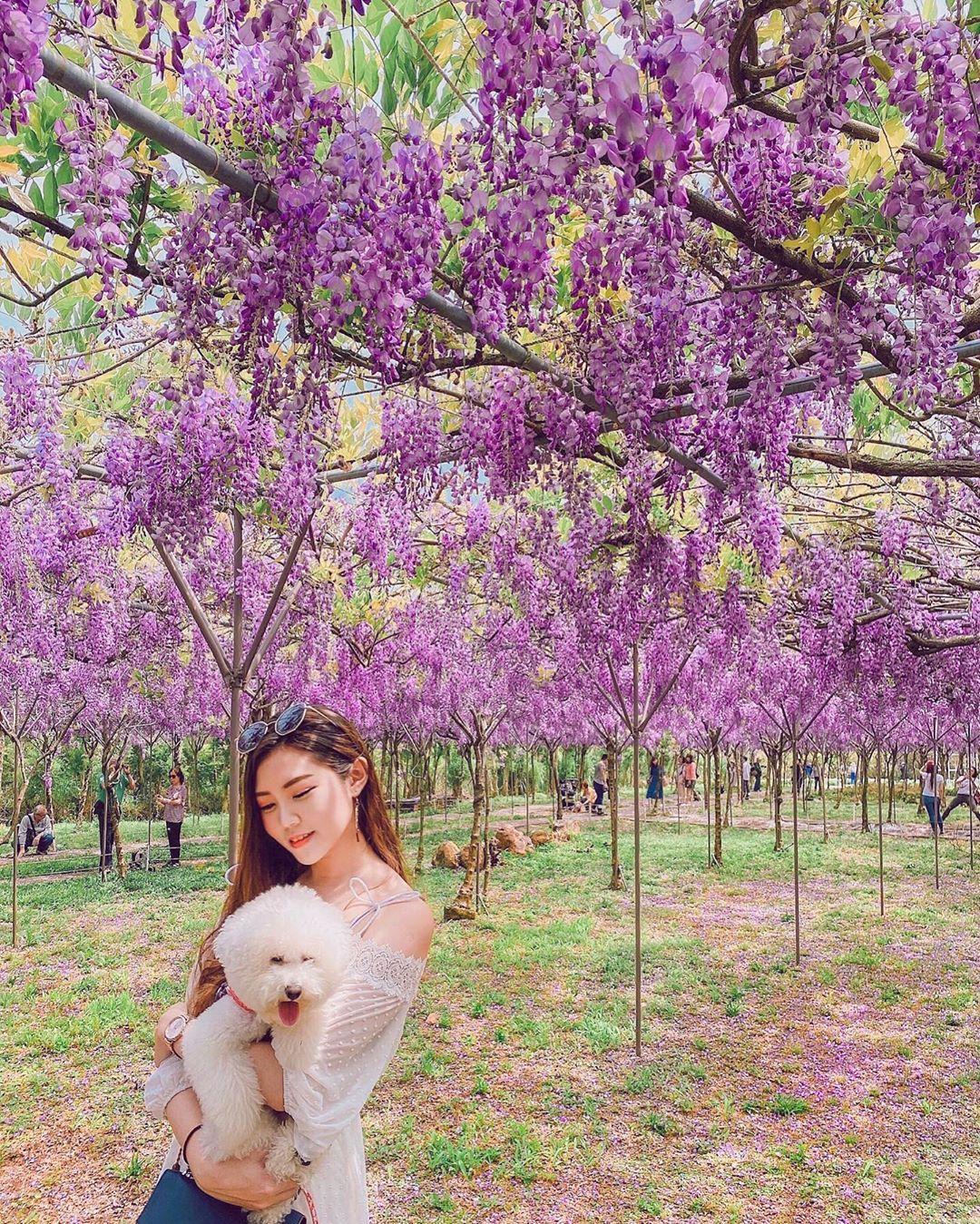 紫藤花咖啡館 水源園區花景