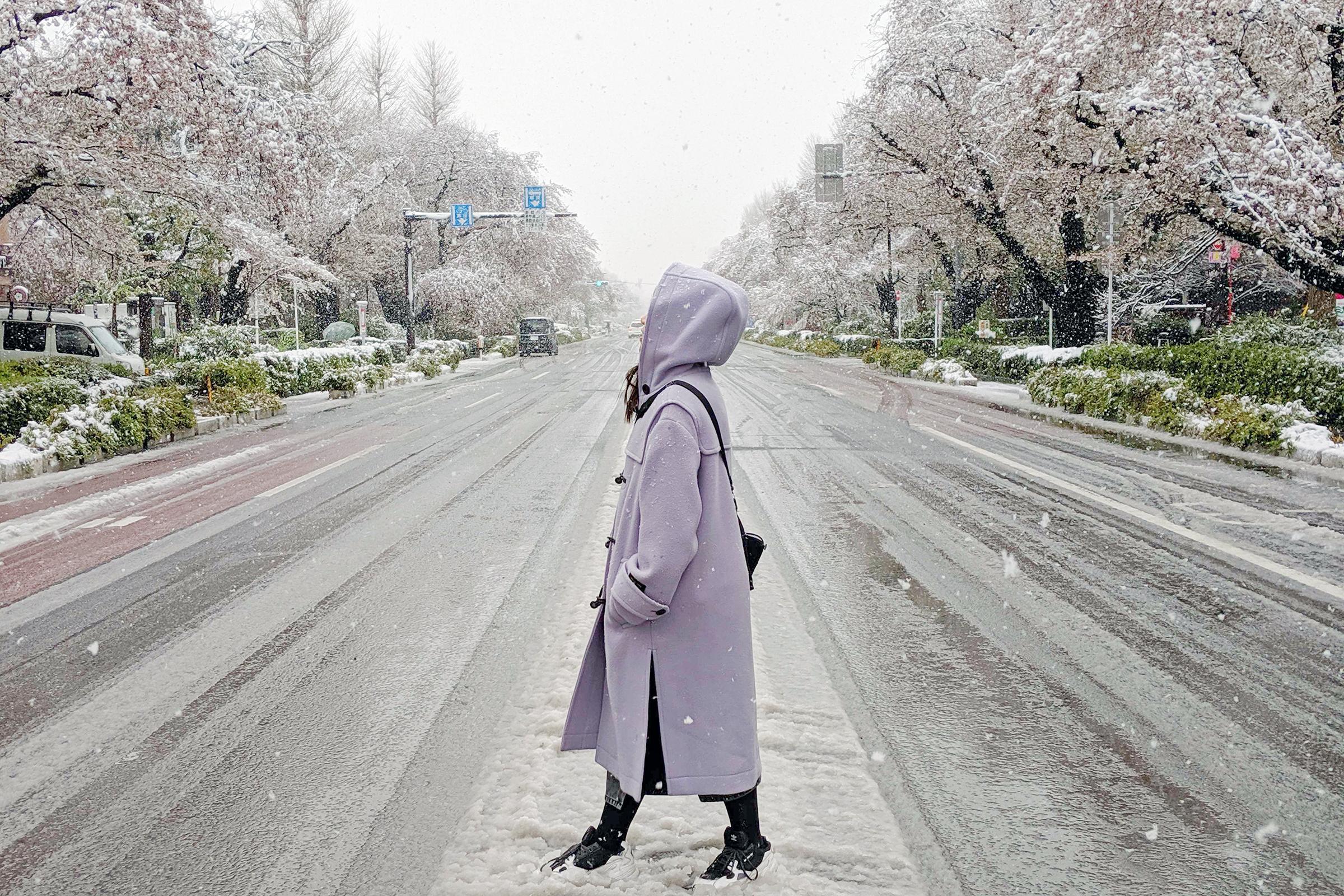 Cherry Blossom in Snow Tokyo
