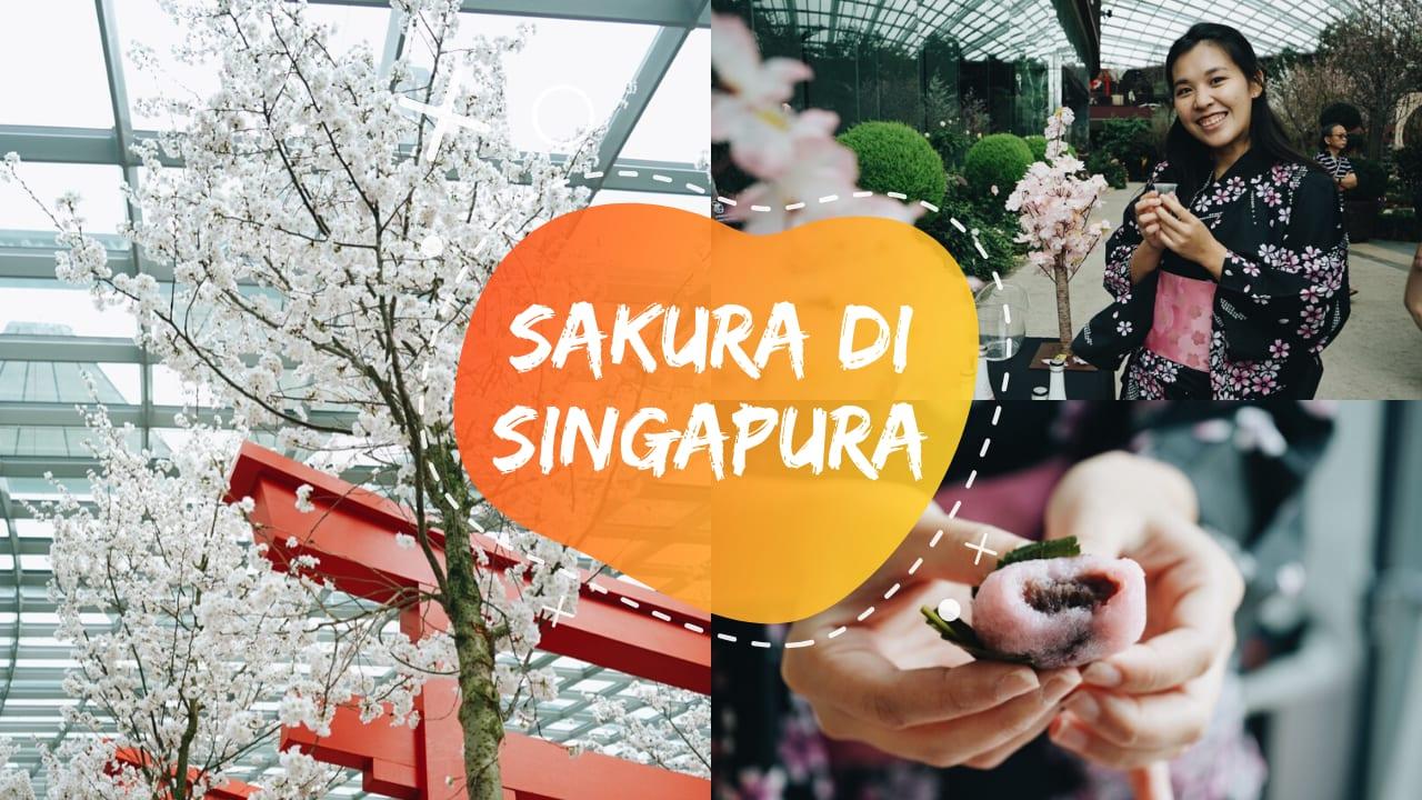 Sakura Matsuri Gardens by the Bay 2020: Ada Sakura di Singapura!