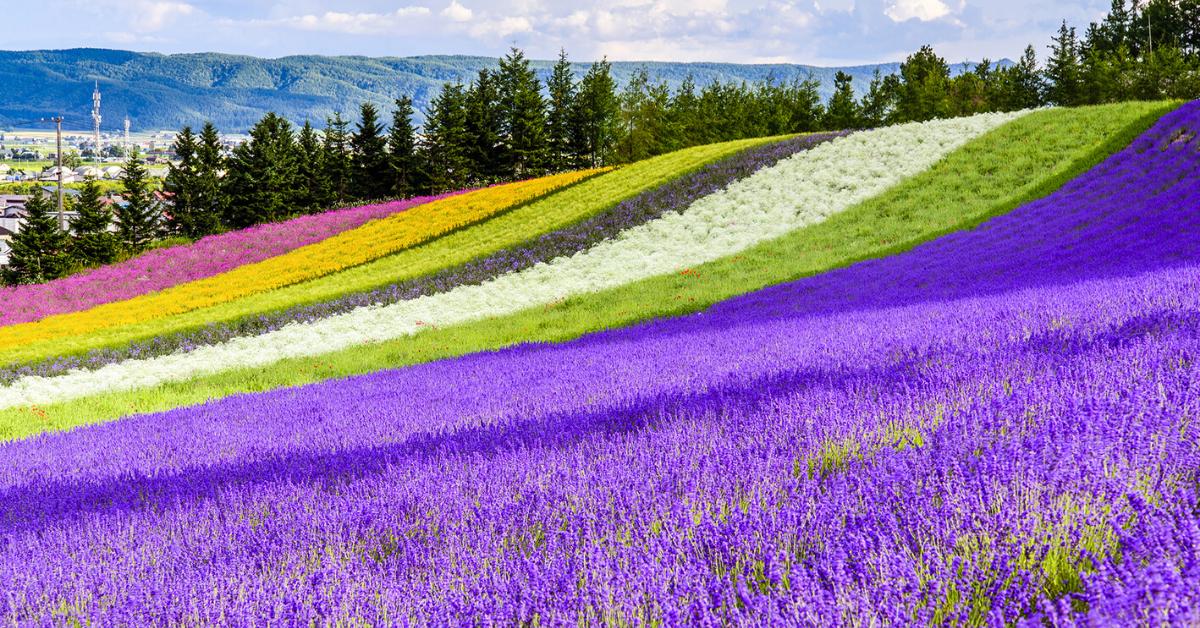 """11 Ý Tưởng Vi Vu Siêu """"Chất"""" Khi Đi Du Lịch Provence Tự Túc"""